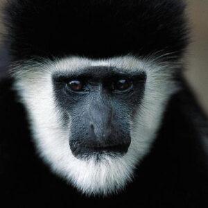 Uganda - Gorillas