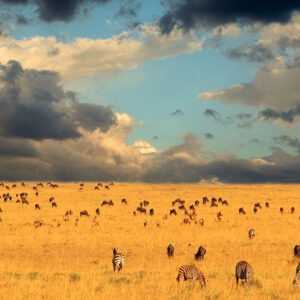 Kenya - End of the Great Migration - Serengeti National Park