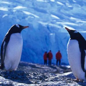 Antarctica Penquin2